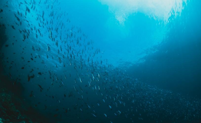 Día Mundial de los Océanos, limpiemos nuestros océanos.