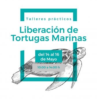 Talleres prácticos: Liberación de tortugas marinas