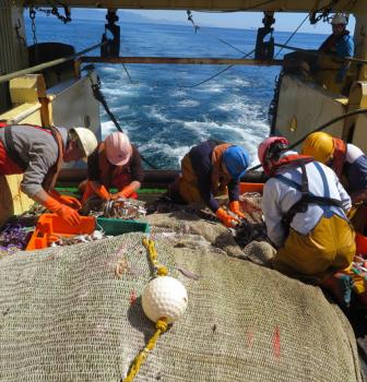 Proyecto Mendes 2: Soluciones avanzadas para reducir capturas no deseadas