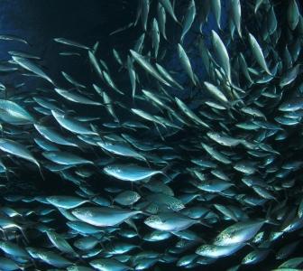 Comienza la consulta pública del anteproyecto de la Ley de pesca sostenible e investigación pesquera