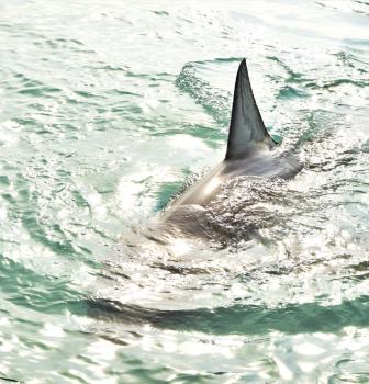 Opromar denuncia una prohibición de la captura de marrajo en el Atlántico